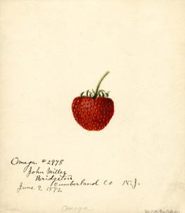 Art Prints of Omega Strawberry by William Henry Prestele