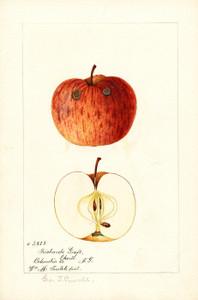 Art Prints of Richards Graft Apples by William Henry Prestele
