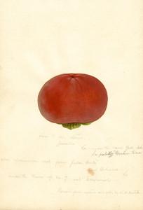 Art Prints of Yedo Ichi Persimmons by William Henry Prestele