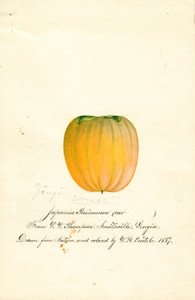 Art Prints of Zengi Persimmon III by William Henry Prestele