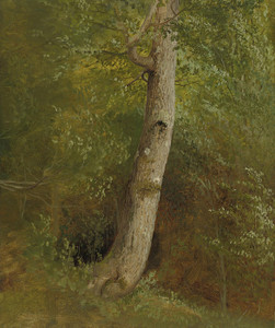 Art Prints of Study of a Tree by William Holbrook Beard