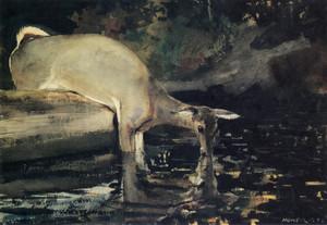 Art Prints of Deer Drinking by Winslow Homer