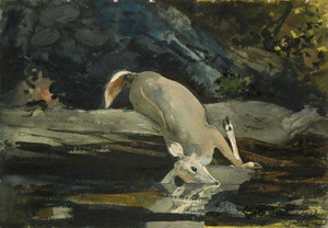 Art Prints of The Fallen Deer by Winslow Homer