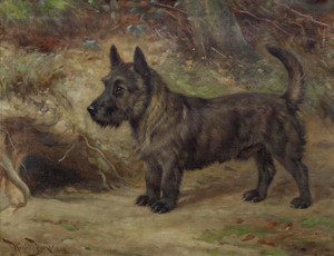 Art Prints of Jamey, a Scottish Terrier by Wright Barker
