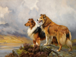 Art Prints of Two Collies Above a Lake by Wright Barker