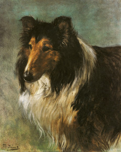 Champion Collie Seedley Sterling by Ferdinand Sinet