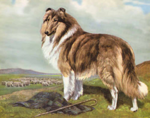 Art prints of The Collie by Edwin Megargee