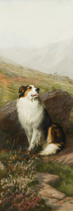 Art prints of Rough Collie by Maud Earl
