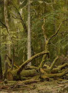 Art prints of Sawn Oak by Ivan Shishkin