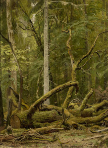 Art prints of Sawn Oak by Ivan Shishkin