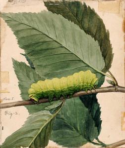 Art prints of Lunar Caterpillar by Abbott H. Thayer