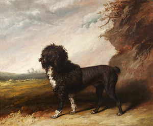 Art Prints of Poodle in a Landscape by Abraham Cooper
