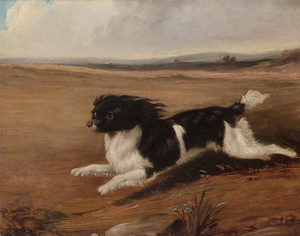 Art Prints of Fidelio, a Spaniel by Abraham Cooper