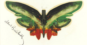 Art Prints of Green Butterfly by Albert Bierstadt