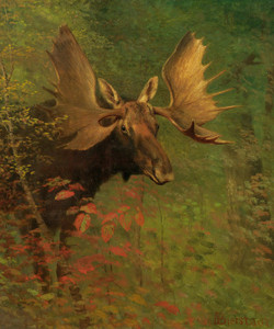 Art Prints of Study of a Moose by Albert Bierstadt