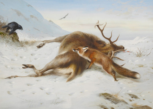 Art Prints of Not for the Larder by Archibald Thorburn