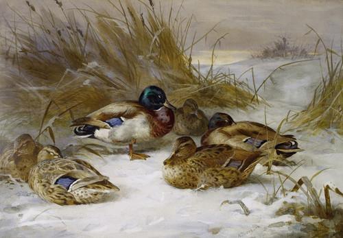 Art Prints of Winter Landscape with Mallard by Archibald Thorburn