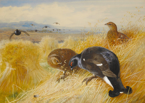 Art Prints of On the Stooks, Blackgame by Archibald Thorburn