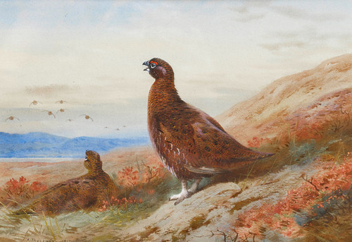 Art Prints of The Challenge by Archibald Thorburn