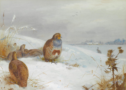 Art Prints of Hard Times, Partridge and a Hare by Archibald Thorburn