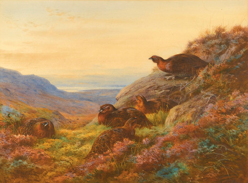Art Prints of When the Gloaming Comes Red Grouse by Archibald Thorburn