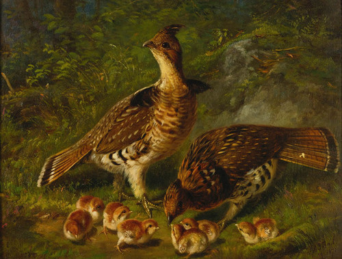 Art Prints of A Pair of Ruffled Grouse and Young by Arthur Fitzwilliam Tait