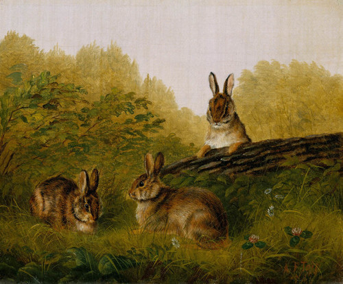 Art Prints of Rabbits on a Log by Arthur Fitzwilliam Tait