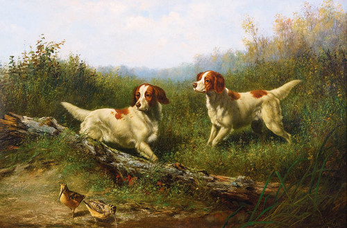 Art Prints of Steady, Woodcock Shooting by Arthur Fitzwilliam Tait