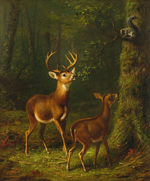 Art Prints of The Forest Adirondacks by Arthur Fitzwilliam Tait
