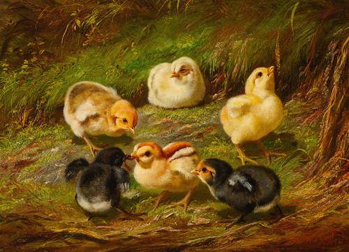 Art Prints of Chicks by Arthur Fitzwilliam Tait