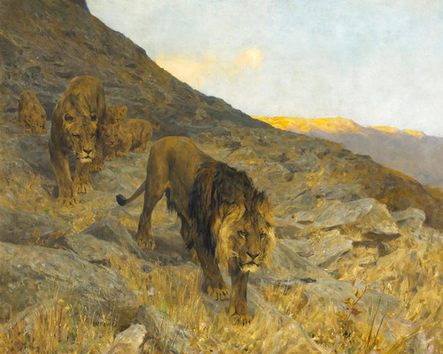 Art Prints of A Family of Lions in a Rocky Landscape by Arthur Wardle
