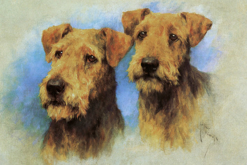 Art Prints of Airedale Terrier Head Studies by Arthur Wardle