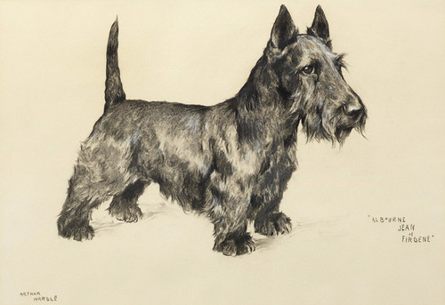 Art Prints of Albourne Jean of Firdene, Scottish Terrier by Arthur Wardle