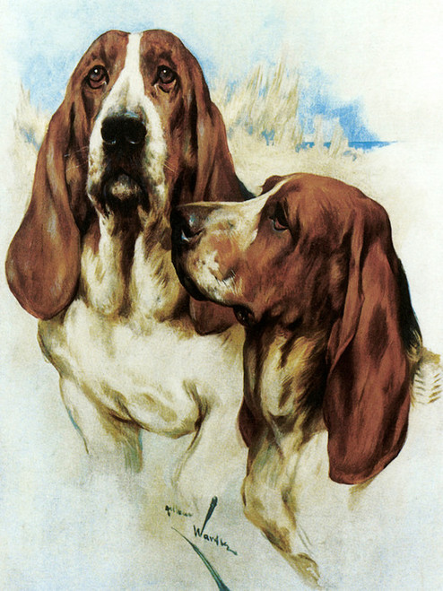 Art Prints of Basset Hounds by Arthur Wardle