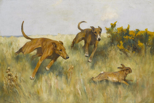 Art Prints of Coursing by Arthur Wardle