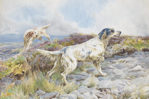 Art Prints of English Setters on a Moor by Arthur Wardle