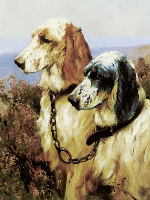 Art Prints of English Setters II by Arthur Wardle