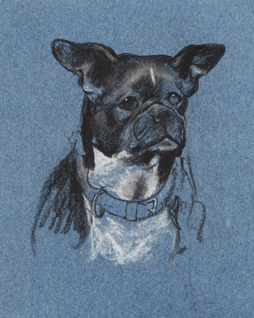 Art Prints of French Bulldog Head Study by Arthur Wardle