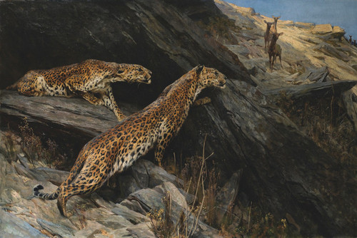 Art Prints of Indian Leopards by Arthur Wardle