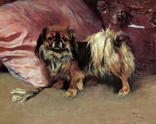 Art Prints of Pobbles, a Pekingese by Arthur Wardle