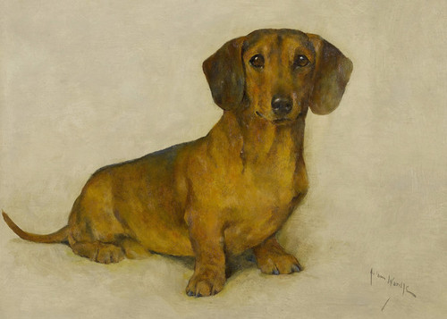 Art Prints of Romeo, a Dachshund by Arthur Wardle