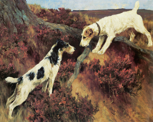 Art Prints of Reconnoitering by Arthur Wardle