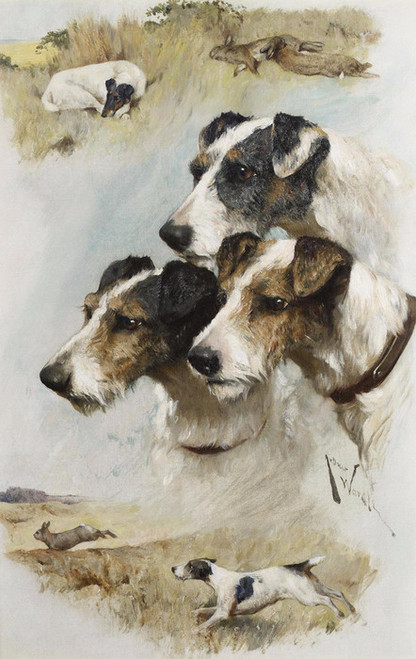 Art Prints of Study of Terriers by Arthur Wardle