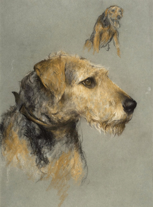 Art Prints of Study of an Airedale Terrier by Arthur Wardle
