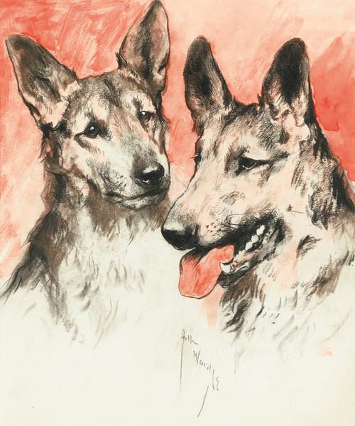 Art Prints of Study of Two German Shepherds by Arthur Wardle