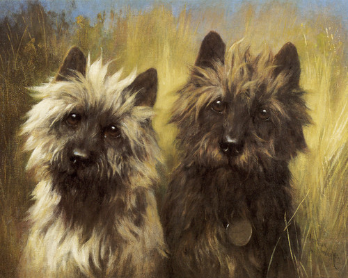 Art Prints of Two Cairn Terriers by Arthur Wardle