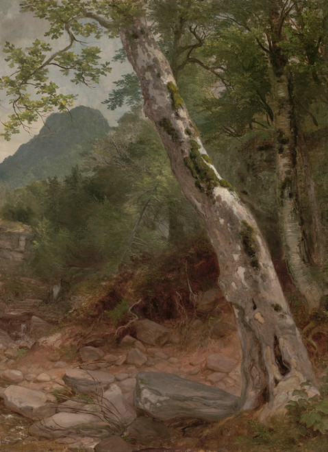 Art Prints of A Sycamore Tree, Plaaterkill Clove by Asher Brown Durand