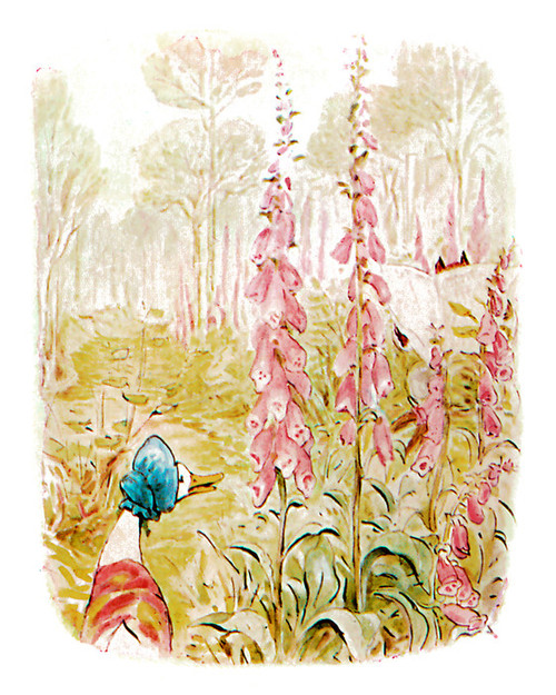 Art Prints of Jemima Sees Fox in the Woods by Beatrix Potter