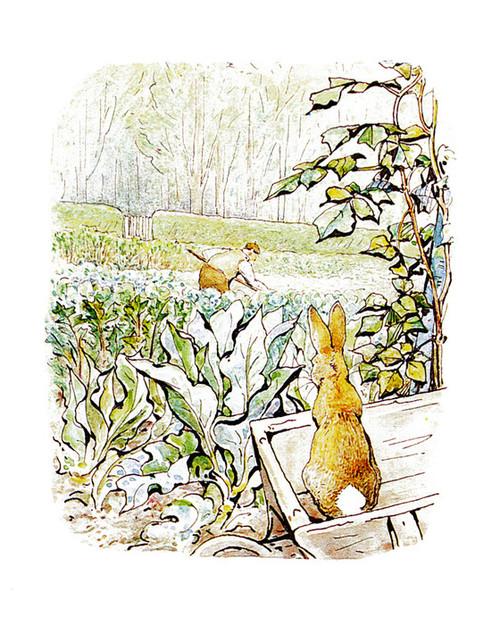 Art Prints of Peter Watches McGregor Hoe Onions by Beatrix Potter