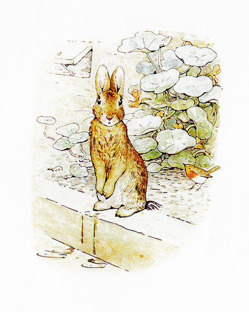 Art Prints of Peter on the Wall by Beatrix Potter